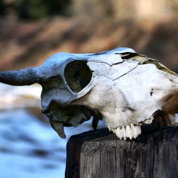 Archeologické múzeum v prírode Liptovská Mara - Havránok