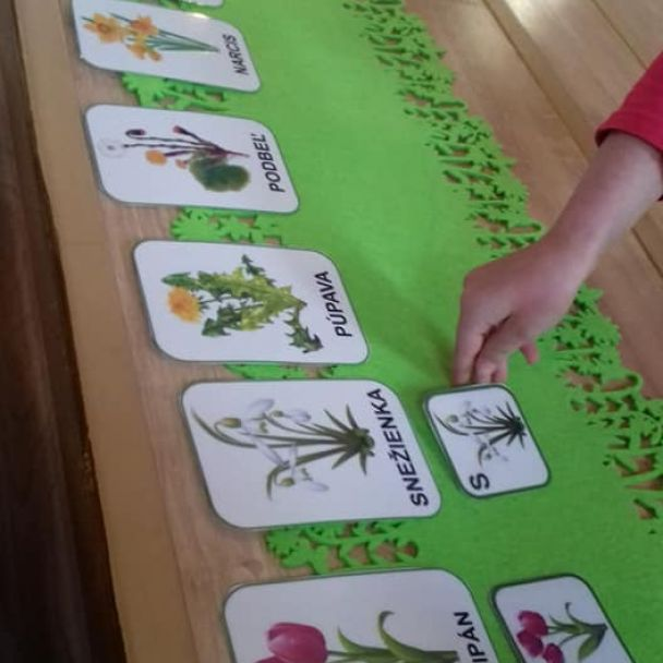 24.08.2021 - Žabky - Od semienka k rastlinke