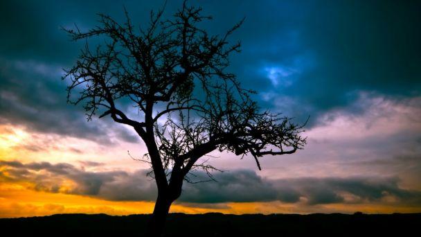 Oznámenie o začatí konania  - výrub stromov